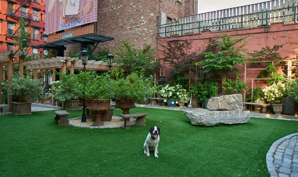 Unwind & Unleash: Soho Grand Dog Park