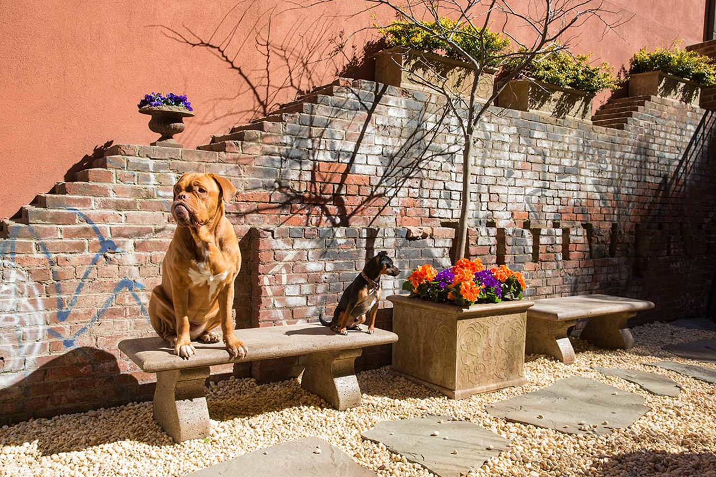 Soho Grand Dog Park